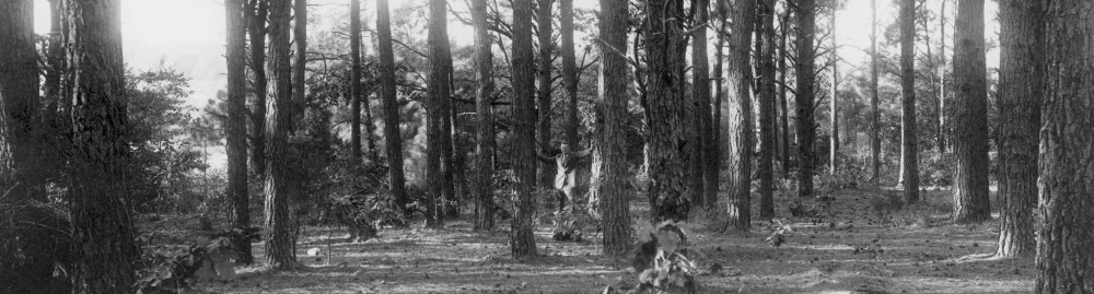 image_13 - Pine Forest Sites of Block H
